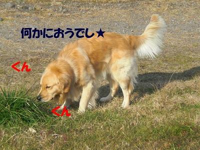 CIMG7092.jpg