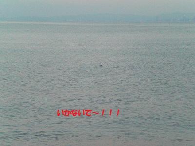 CIMG7365.jpg