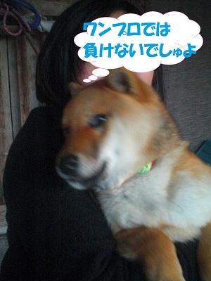 CIMG7486.jpg