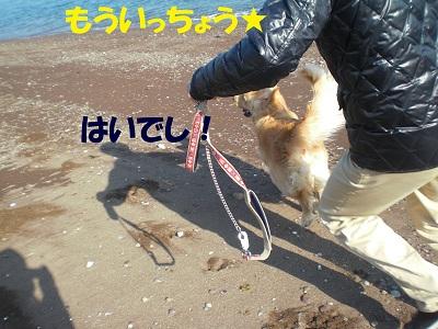 CIMG8031_20110128213402.jpg