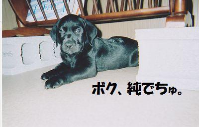 110215_blogjun2.jpg