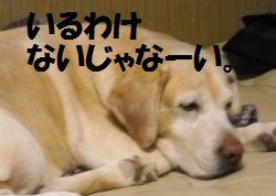 110215_blogubu2.jpg