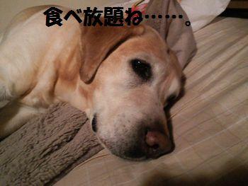 110216_blogubu.jpg