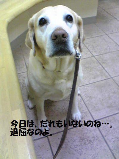 blog_11011201ubu.jpg