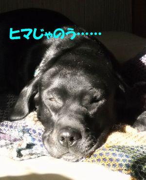 blog_1101151jun.jpg