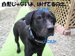 blog_1101152jun.jpg