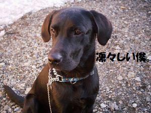 blog_1101153jun.jpg