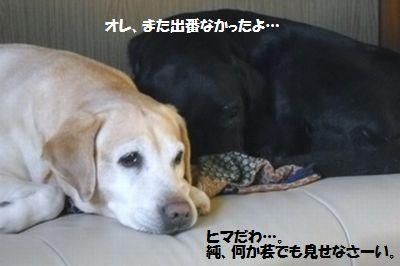 blog_1101154jun.jpg