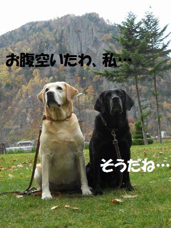 blog_1101171ubumayu.jpg