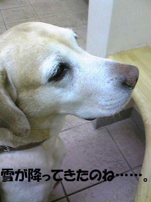 blog_1101202ubu.jpg