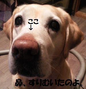 blog_110125ubu1.jpg
