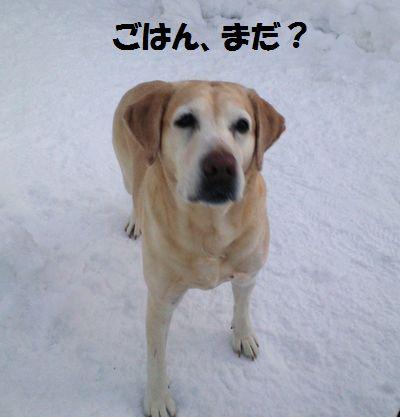 blog_110125ubu2.jpg