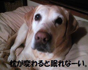 blog_110126ubu2.jpg