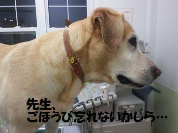 blog_110127ubu1.jpg
