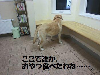 blog_110127ubu2.jpg