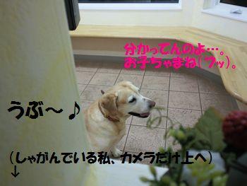 blog_110127ubu3.jpg