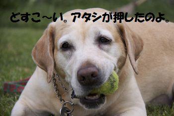 blog_110131ubu2.jpg