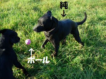 blog_110201jun.jpg