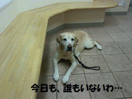 blog_110203ubu3.jpg