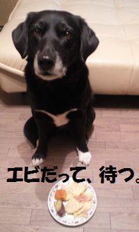blog_110206ebi1.jpg