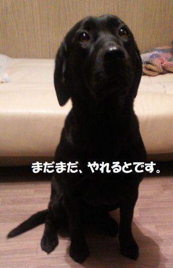 blog_110207buri1.jpg