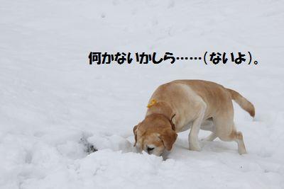 blog_110207ubu2.jpg