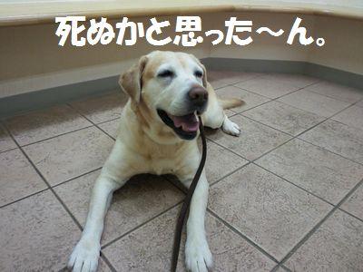 blog_110210ubu1.jpg
