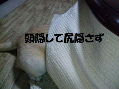 blog_110210ubu2.jpg