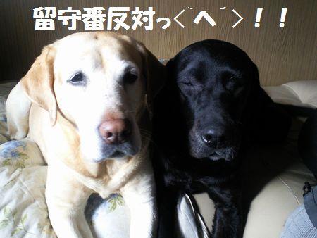blog_110210ubujun.jpg