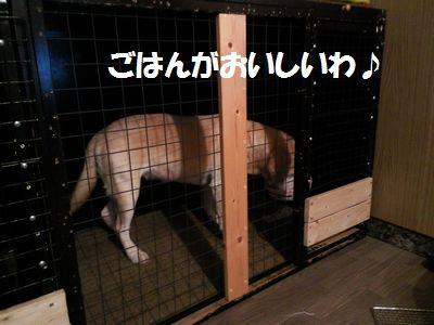 blog_110213ubu1.jpg