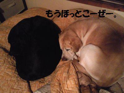 blog_110213ubujun.jpg