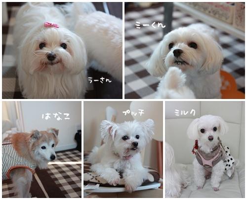 ミー君の誕生会2013page