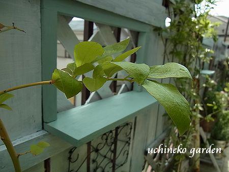 フェンスの小窓