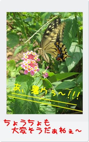 IMG_2287.jpg