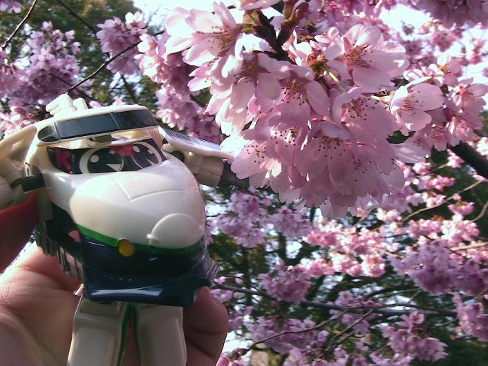 桜とケーくん