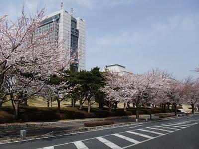 20120410_mito-sakura-2.jpg