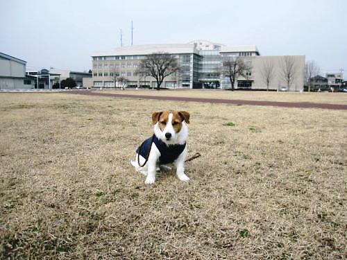 2011お散歩004