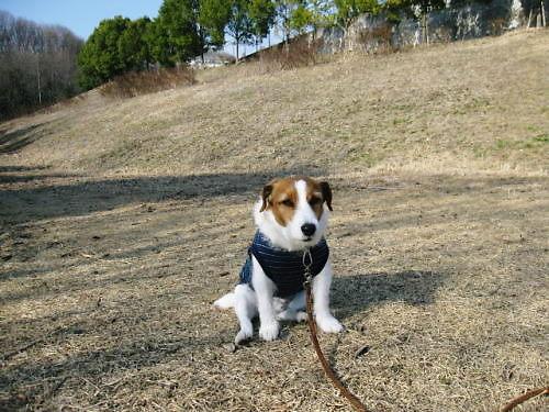 2011長岡公園141