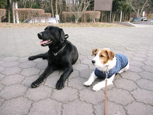 2011長岡公園144