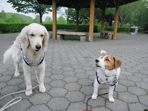 2011長岡公園303