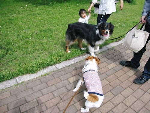 2011長岡公園315
