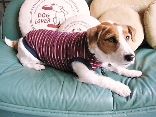 2011犬服001