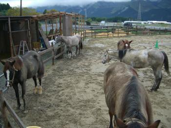 泥んこ集合写真20111030212946