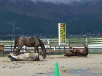 20111030212709砂浴び