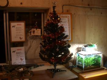 20111118233737クリスマスツリー