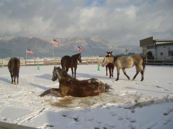 2011122518014雪ゴロゴロ