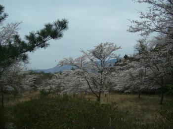 20120410203853桜