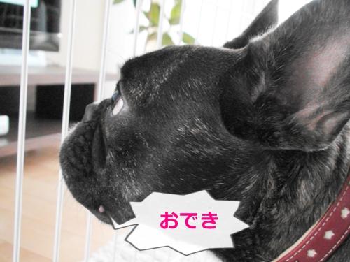 20110622_2.jpg