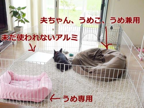 20110701_3.jpg