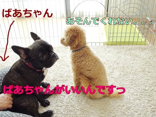 20110707_5.jpg